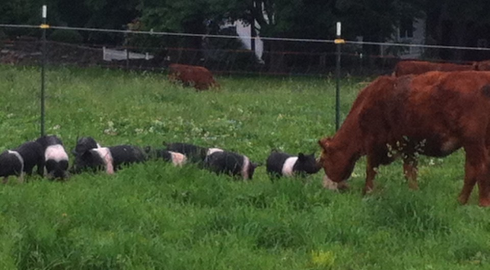 Pastured Pork at Stuart Family Farm